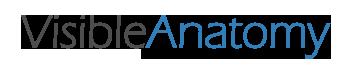 Visible Anatomy | 3D Human Anatomy Explorer Logo