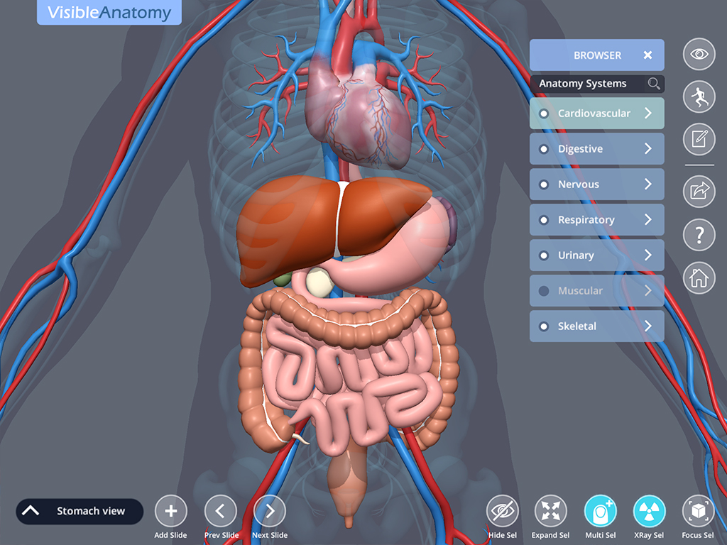 Visible_Anatomy_ScreenshotC