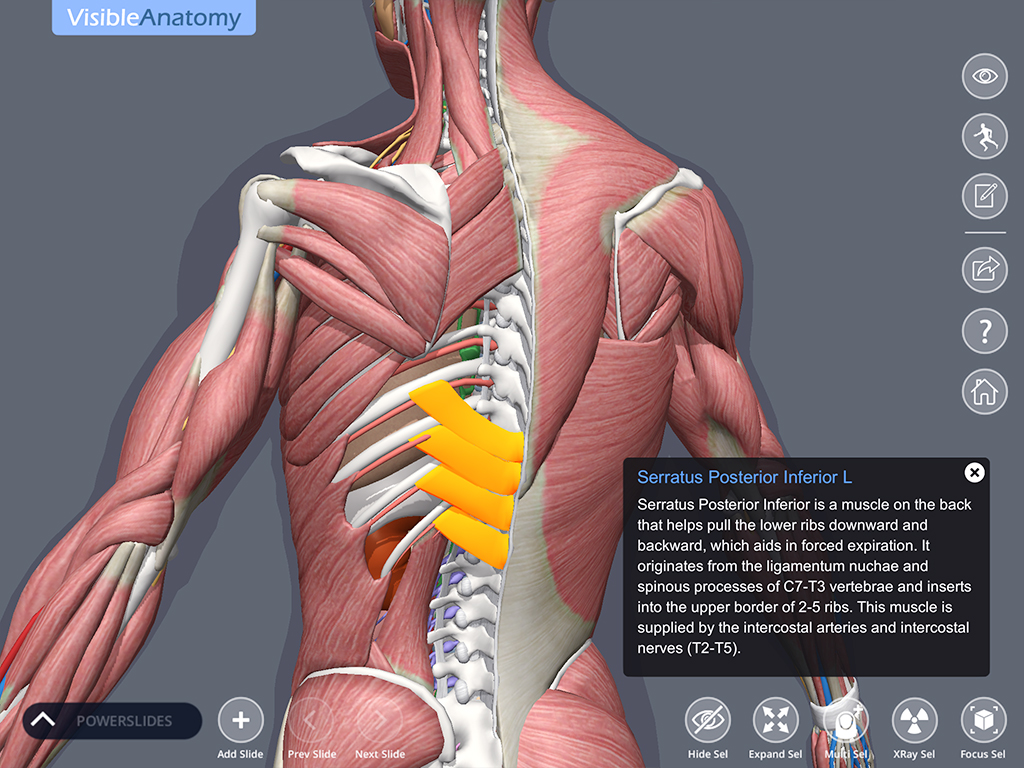 Visible_Anatomy_ScreenshotD