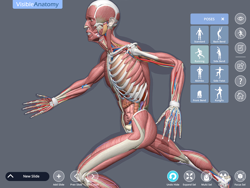 Visible_Anatomy_ScreenshotH