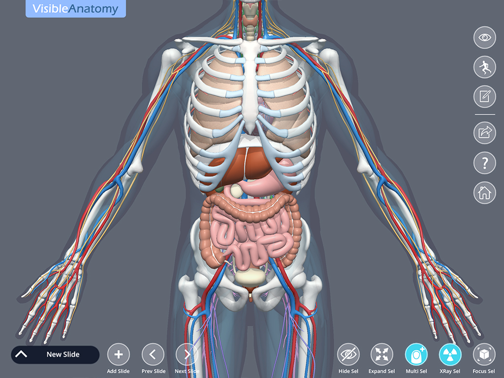 Visible_Anatomy_ScreenshotI