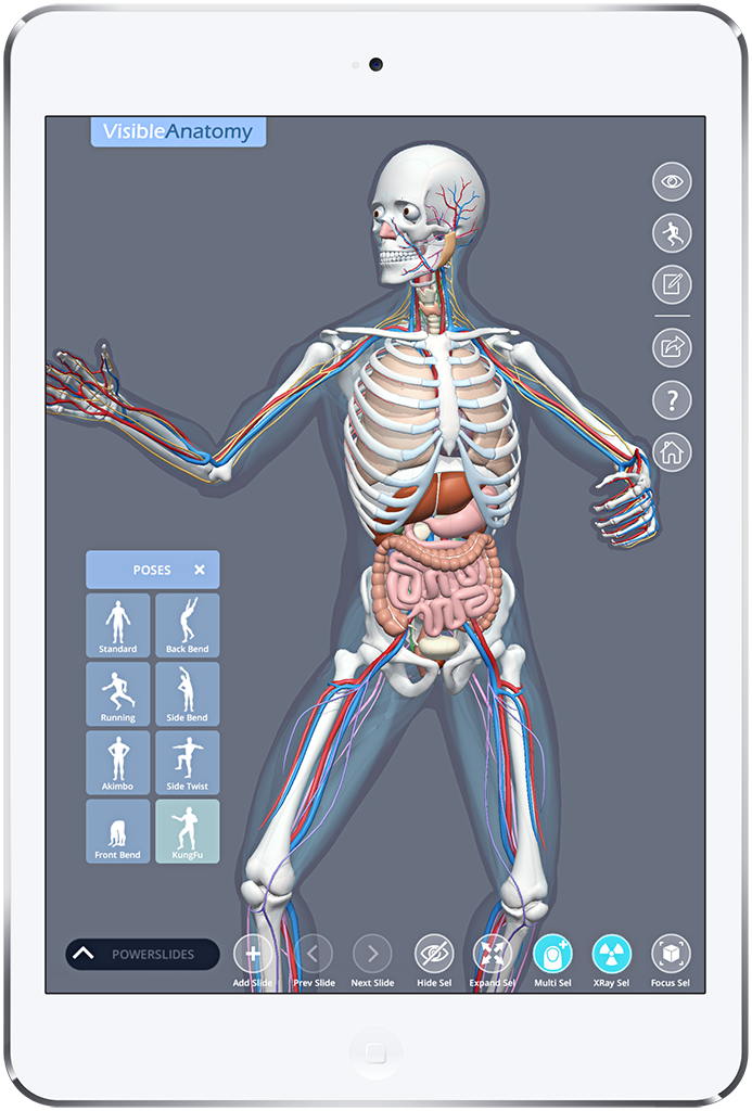 Visible Anatomy 3d Human Anatomy Explorer Medical 3d Models